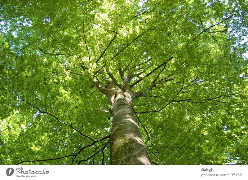 The most beautiful green in the world Leaf canopy Green Spring Tree Bright green Delicate Planning Wood Forest Carbon dioxide Treetop Protective Wake up