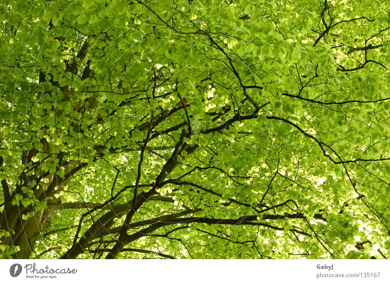The most beautiful green in the world II Leaf canopy Green Spring Tree Bright green Delicate Planning Wood Forest Carbon dioxide Treetop Protective Wake up