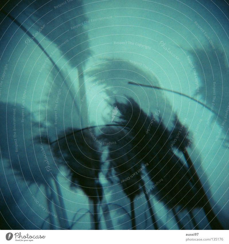 wagging Plant Feather duster Holga Double exposure Medium format Analog Lomography