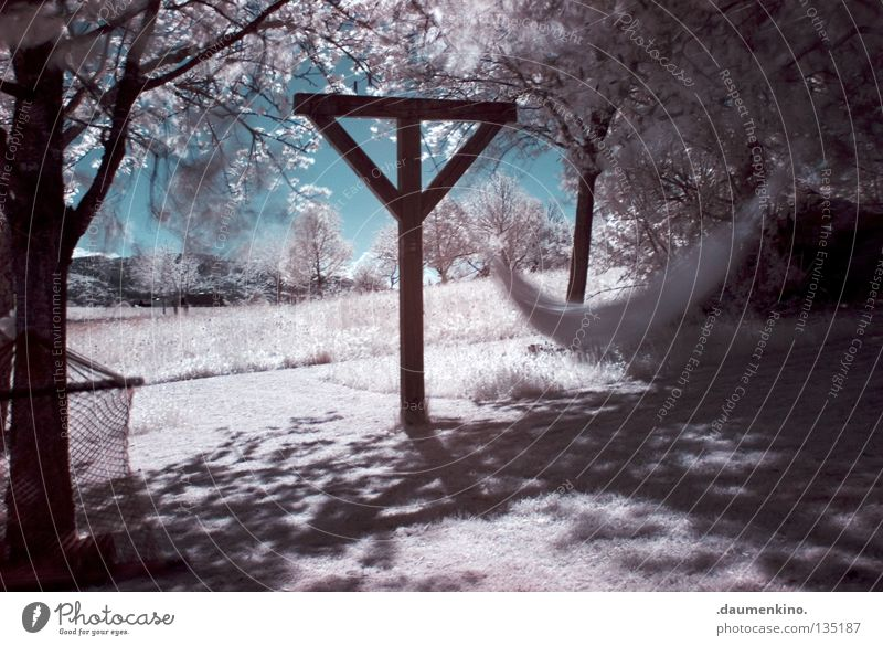 Beautiful Sky White Tree Vacation & Travel Leaf Snow Relaxation Meadow Grass Movement Garden Dream Park Landscape Earth