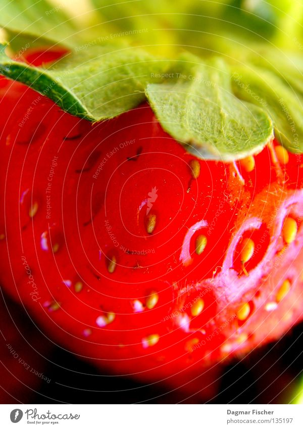 A strawberry Colour photo Interior shot Studio shot Close-up Detail Macro (Extreme close-up) Food Fruit Dessert Jam Nutrition Organic produce Vegetarian diet