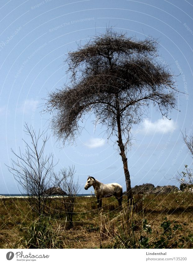 Sky White Tree Ocean Beach Coast Rock Fantastic Horse Mammal Fairy tale Mold Chained up