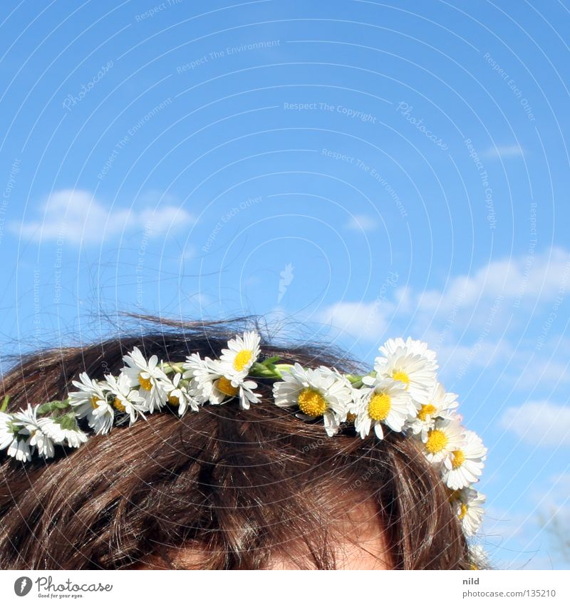 Sky White Flower Blue Summer Blossom Spring Hair and hairstyles Head Decoration Delicate Beautiful weather Daisy Treetop Sky blue Meadow flower