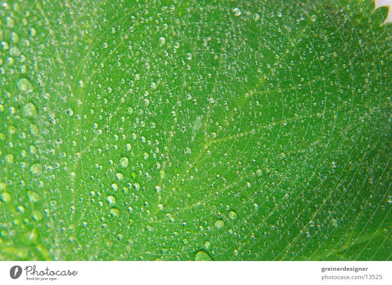 Nature Green Leaf Wet Fresh Damp Surface