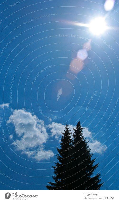 Sky Sun Blue Summer Black Clouds Warmth 2 Physics Fir tree Sky blue Coniferous trees