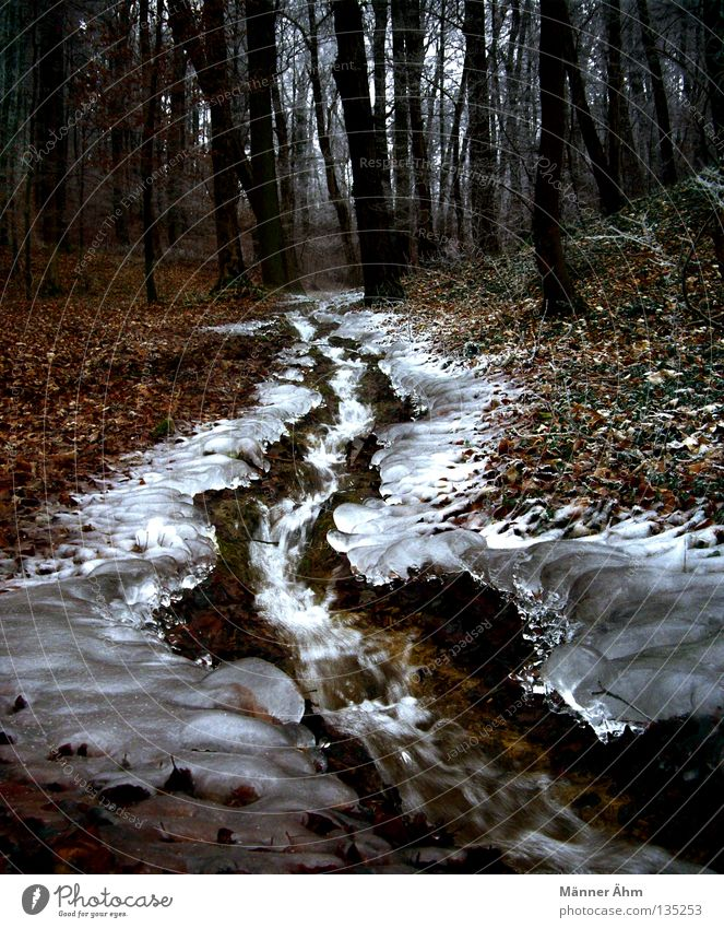 iceberg Brook Forest Leaf Winter Tree Flow Bubbling Downward Americas Ice Snow Nature Landscape Water Inject Walking Tree trunk Exterior shot