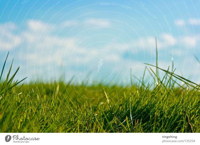 Nature Sky Green Blue Clouds Meadow Grass Horizon Lawn Near Floor covering Under Blade of grass