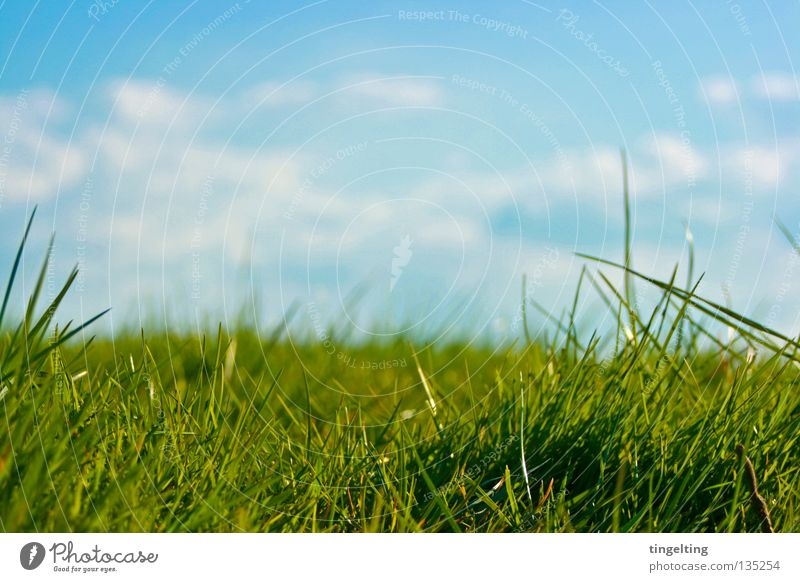 ordinary meadow Meadow Grass Green Horizon Clouds Blade of grass Near Under Lawn Sky Blue Floor covering Nature