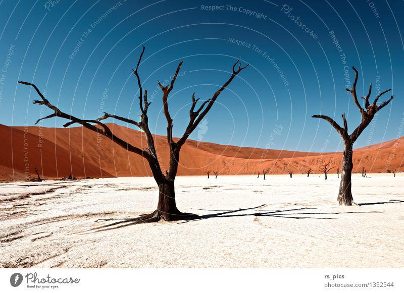 Dead Vlei Nature Landscape Elements Sand Cloudless sky Loneliness Colour Mysterious Death Transience Colour photo Exterior shot Deserted Day Light Contrast