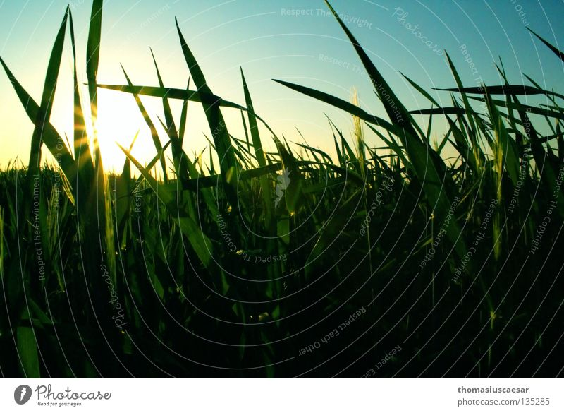 Sky Sun Green Blue Calm Yellow Dark Grass Spring Warmth Contentment Bright Field Physics Stalk Easy