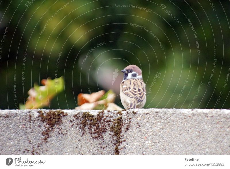 What's the matter with you? Environment Nature Animal Bird 1 Brash Free Small Near Natural Sparrow Wall (barrier) Colour photo Multicoloured Exterior shot