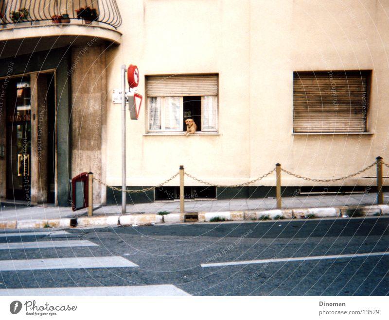 street dog Dog France Zebra crossing Photographic technology Street snapshot bizarre