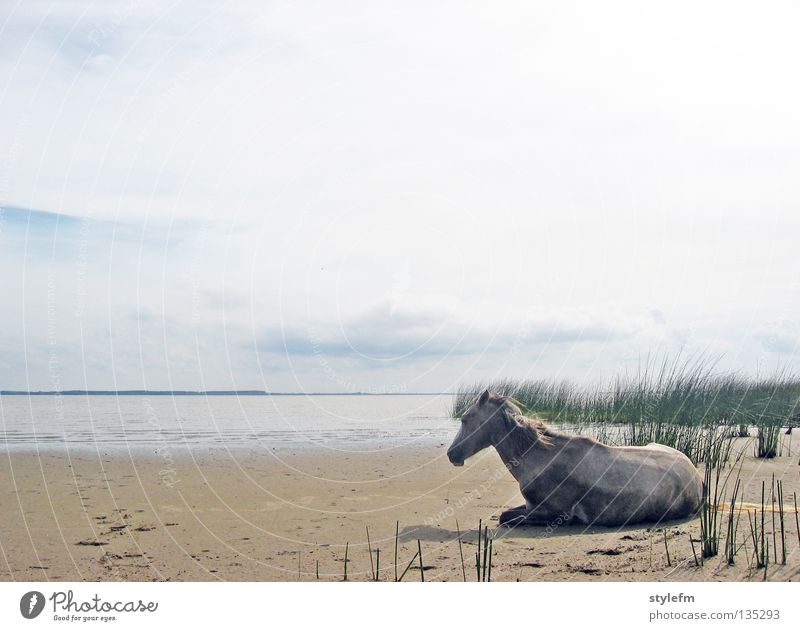 back to uruguay Horse Sleep Animal Loneliness Beach Clouds Soft Common Reed Green Ocean Brown Wet Might Lake Infinity Calm Serene Untouched Exterior shot