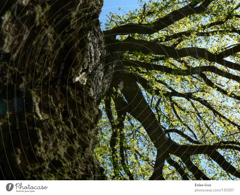 tree Tree Leaf Branchage Treetop Branched Green Tree bark Think Beautiful Interesting Spring Transport Tree trunk Sky Blue brown. black Relaxation plump ponder
