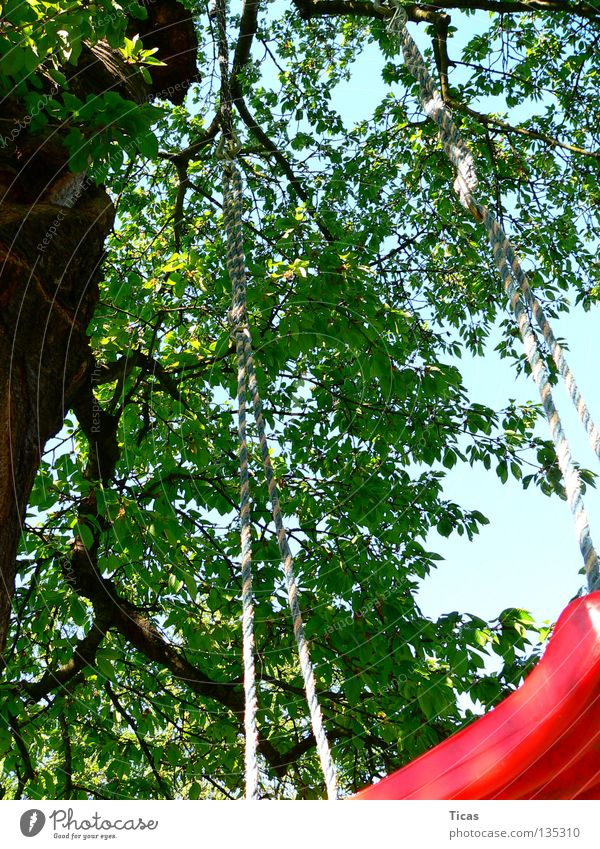 tree swing Swing Tree Playing Summer Sky Joy play fun child children childhood Garden outside Tall high amusement Exterior shot