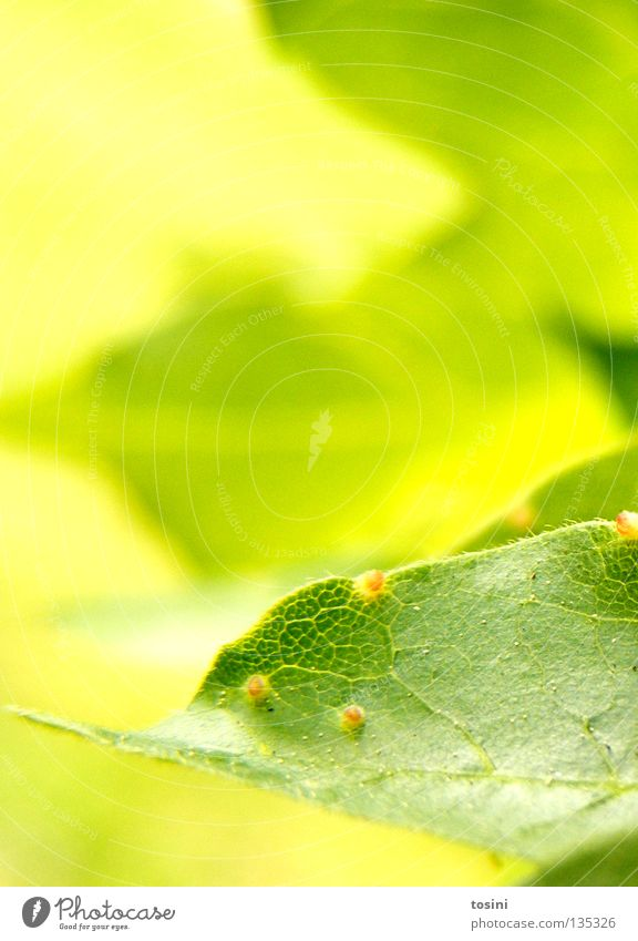Nature Tree Green Summer Leaf Spring Hope Delicate Pollen Stamen Photosynthesis Blossom
