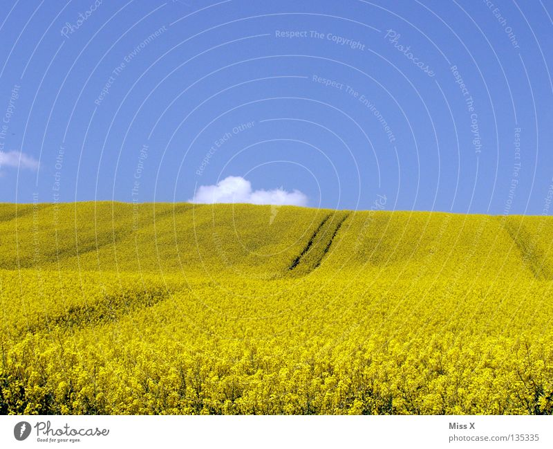 yellow hill Colour photo Exterior shot Copy Space top Copy Space bottom Trip Summer Waves Mountain Nature Plant Sky Clouds Beautiful weather Flower