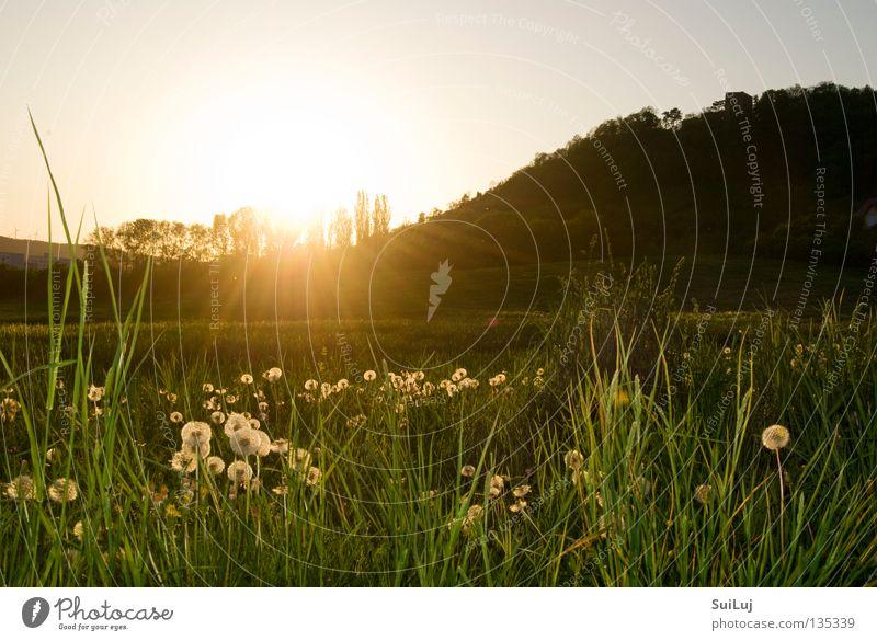 Sun Summer Meadow Grass Landscape Horizon Sunset Dandelion