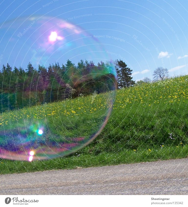windswept Soap bubble Bursting Flower meadow Forest Round Glittering Summer Spring Bubble Lanes & trails Wind