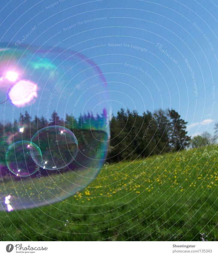 windswept Soap bubble Summer Spring Glimmer Glittering Flower meadow Forest Wind Bubble Sun