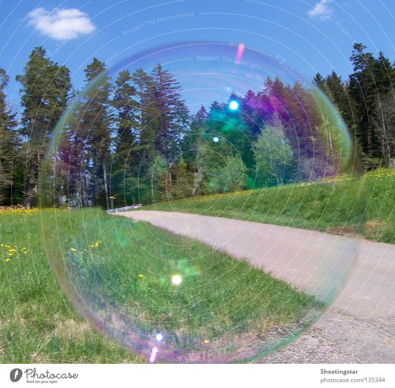 soap bubble Soap bubble Meadow Forest Round Glittering Green Spring Lanes & trails Sky Blue