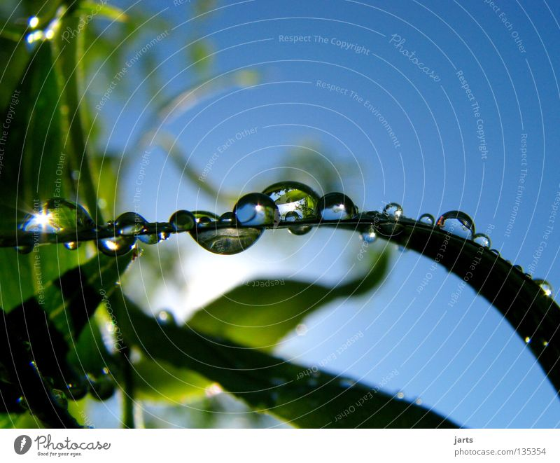 Nature Water Beautiful Sky Tree Sun Blue Leaf Rain Drops of water Wet Rope Fresh Refreshment