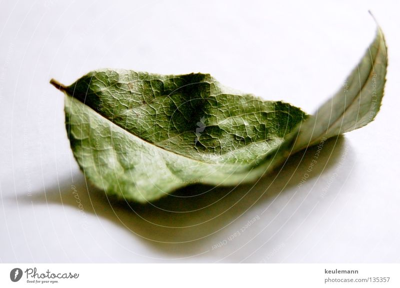 The leaf Still Life Shadow play Loneliness Calm green leaf Nature