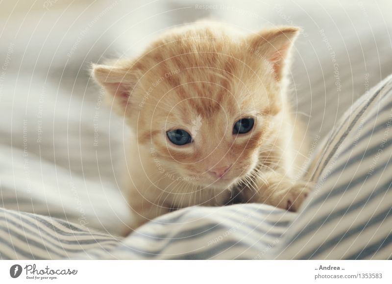 Baby cat 2 Pet Cat 1 Animal Going Sleep red cat putty Discover first steps Interior shot Kitten Colour photo
