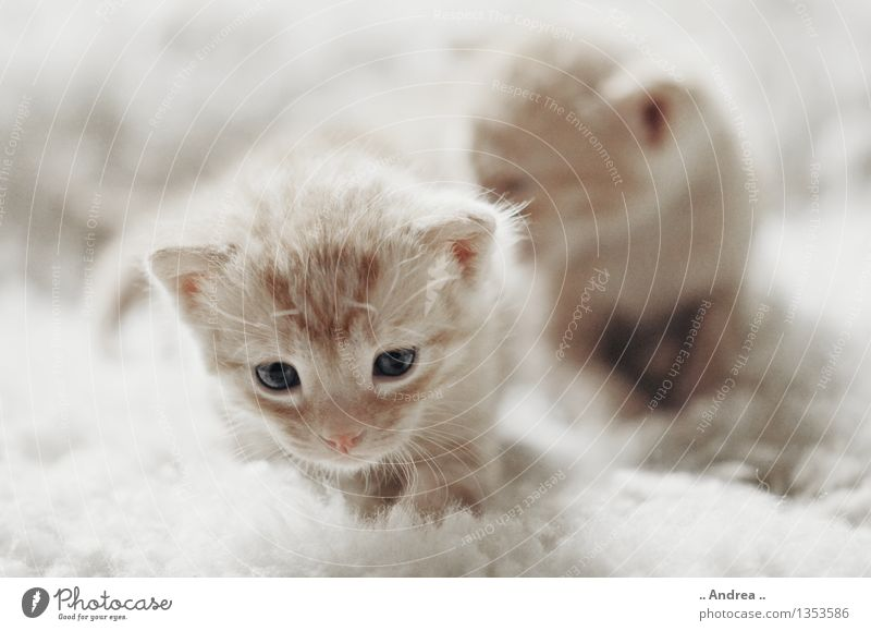 Cat Animal Baby animal Going Pair of animals Discover Pet Brothers and sisters Kitten Animal family