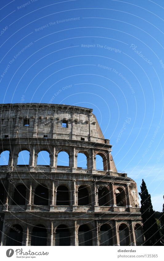 Broken Colossus Colour photo Exterior shot Copy Space top Sunlight Front view Education Art Culture Manmade structures Historic Rome Europe Italy Ancient