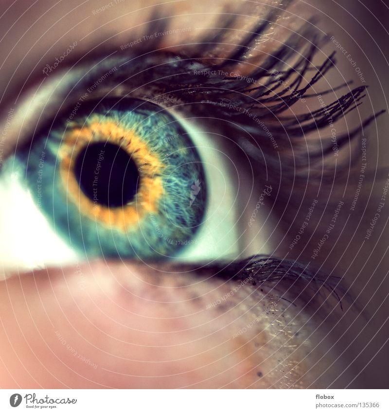 Human being Woman Youth (Young adults) Beautiful Eyes Feminine Cosmetics Make-up Eyelash Lens Senses Pupil Mascara Iris Parts of body