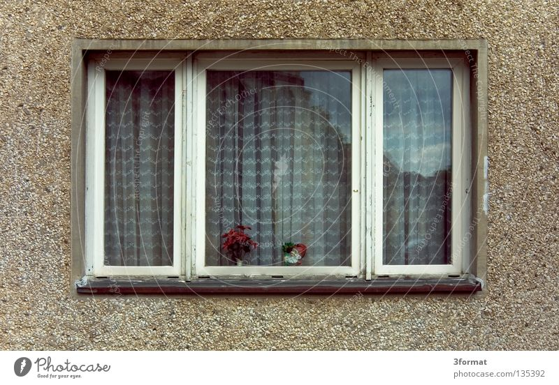 Plant Flower Loneliness House (Residential Structure) Window Architecture Gray Happy Building Flat (apartment) Facade Modern High-rise Gloomy Good Grief