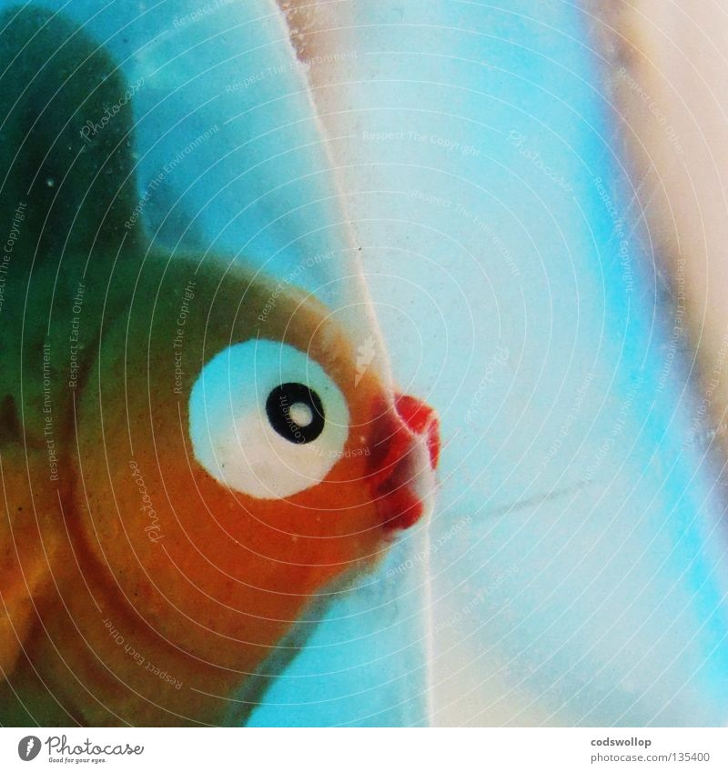 Water Eyes Exceptional Fish Kitsch Toys Section of image Partially visible Goldfish Fish head Animal figure