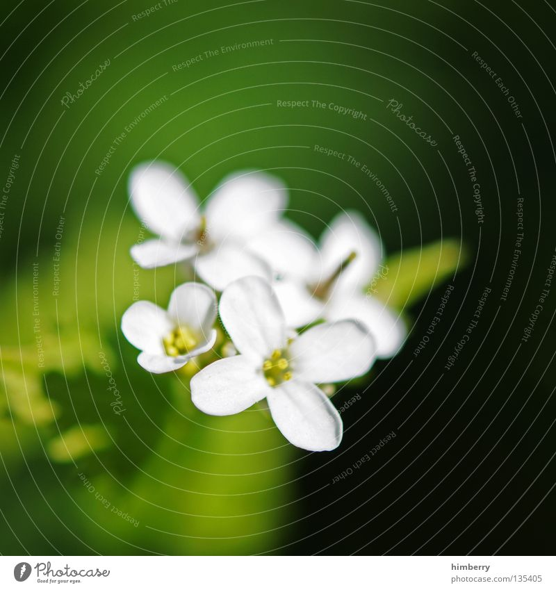 Nature Plant Beautiful Colour Summer White Flower Red Blossom Spring Background picture Growth Fresh Transience Hope Grief