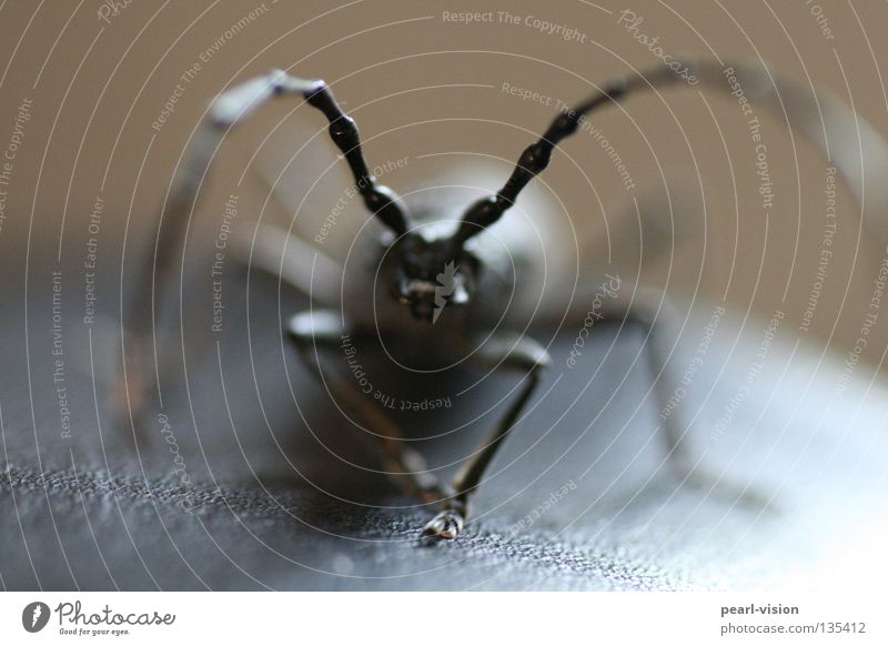Black Threat Contact Part Beetle Antenna Feeler