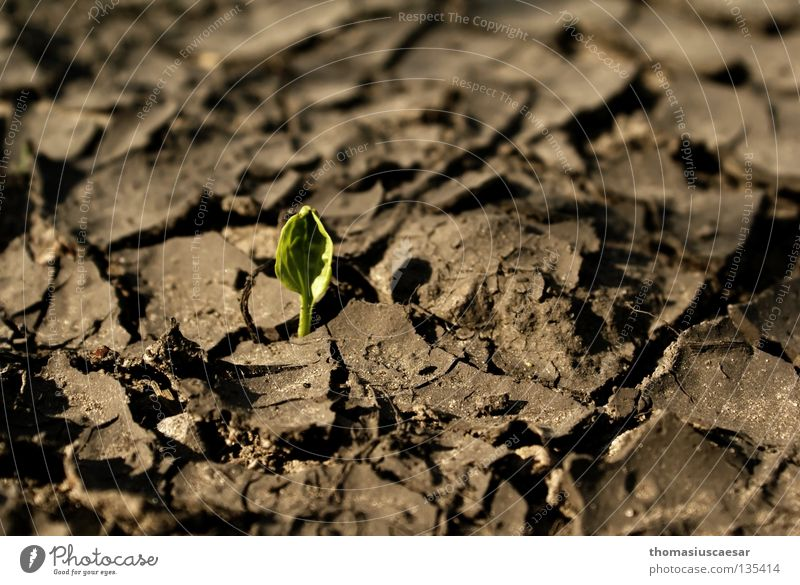 Nature Green Plant Spring Gray Sand Brown Small Earth Gloomy Floor covering Delicate Strong Dry Illuminate Crack & Rip & Tear