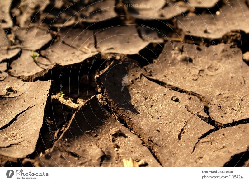 Dark Death Warmth Sand Bright Brown Earth Floor covering Desert Physics Dry Fatigue Crack & Rip & Tear Dust Comfortless