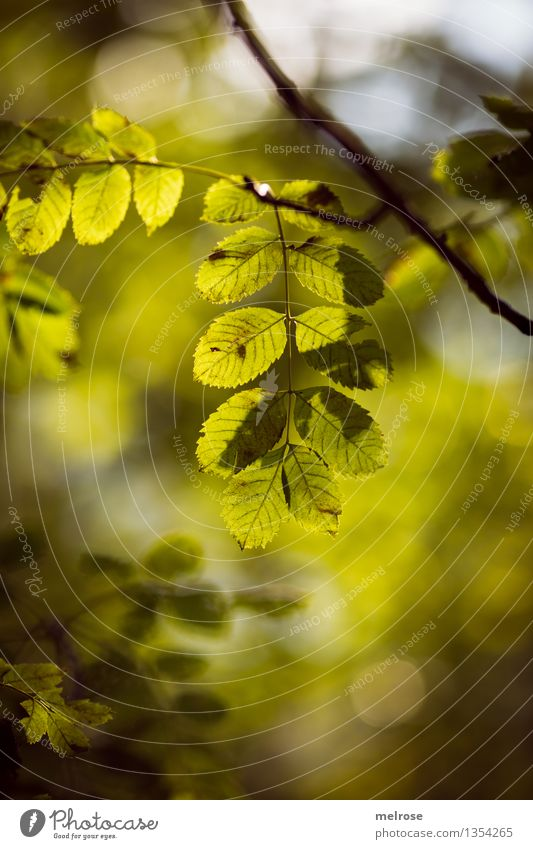 Nature Green Beautiful Relaxation Leaf Forest Environment Autumn Natural Style Freedom Brown Moody Glittering Contentment Illuminate