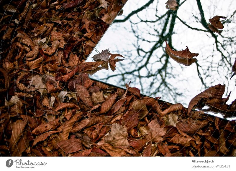 Leaf Autumn Wall (building) Gray Brown Crazy Image Mirror Painting and drawing (object) Retirement Mystic Parking Self portrait Limp Unclear Remote