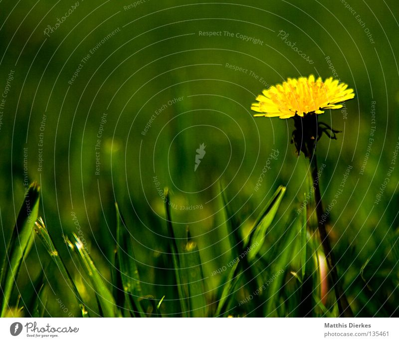 Hand Sky Flower Green Blue Plant Summer Yellow Life Meadow Blossom Freedom Air Wind Fingers Delicate