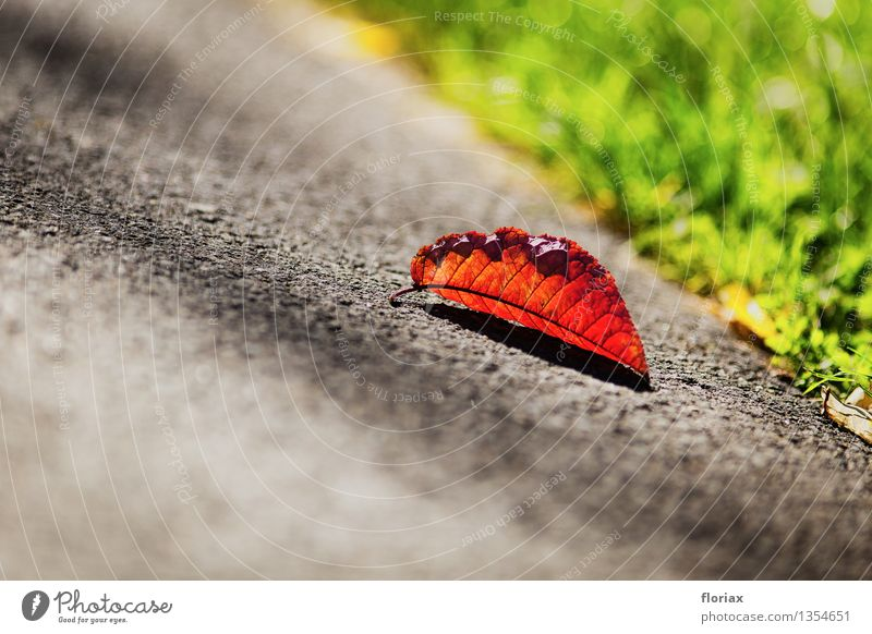 approaching autumn Environment Nature Plant Autumn Beautiful weather Old To fall Illuminate Lie Warmth Brown Gray Green Leaf Asphalt Street Seasons