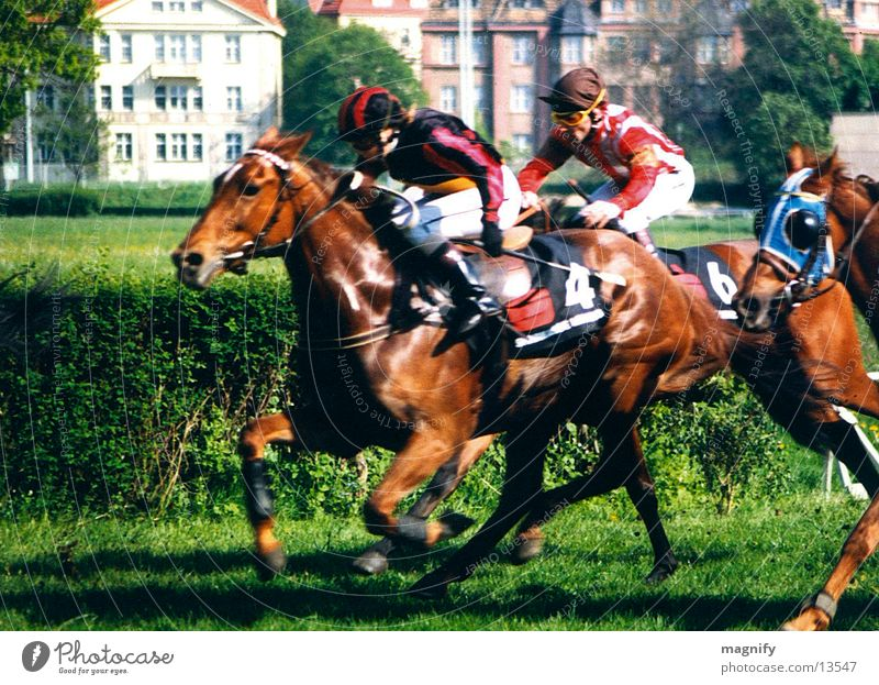 horse race Horse Racecourse Horseracing Equestrian sports Gallopp race Animal Man final spurt Running Target