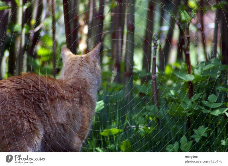 Nature Green Leaf Calm Loneliness Relaxation Cat Orange Contentment Dangerous Bushes Stripe Threat Ear Observe Pelt