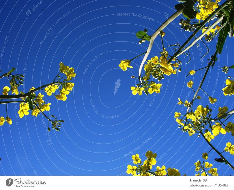 Sky Nature Blue Green Beautiful Plant Flower Colour Loneliness Calm Relaxation Landscape Yellow Spring Freedom Blossom