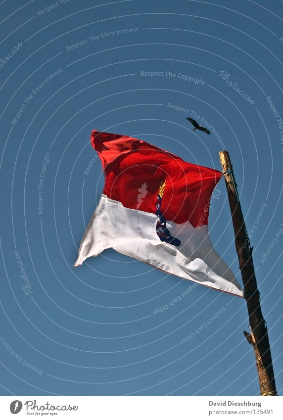 Circling Milan Flag Bird Kite Beak Claw Foraging Hesse Federal State Gale Flagpole Wood Tree Tree bark Red Coat of arms Action Germany Aviation Bird of prey