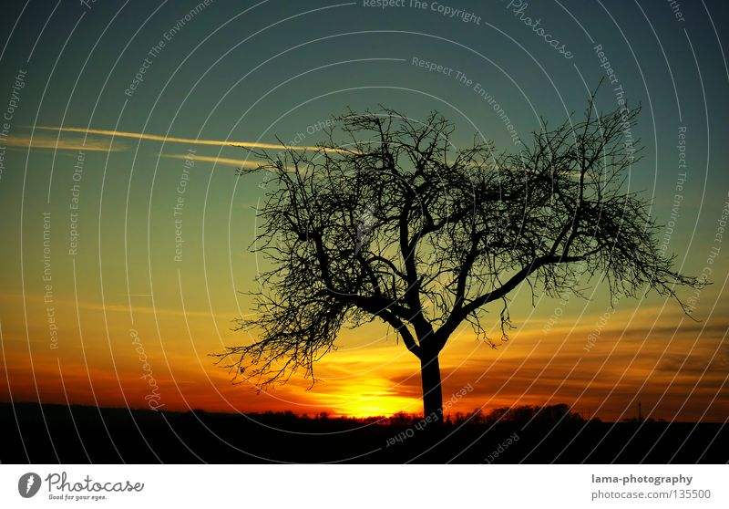 The Sunset Twilight Sunbeam Sunrise Morning Tree Winter Growth Flourish Silhouette Glow Panorama (View) Background picture Summer Seasons Romance Progress Night