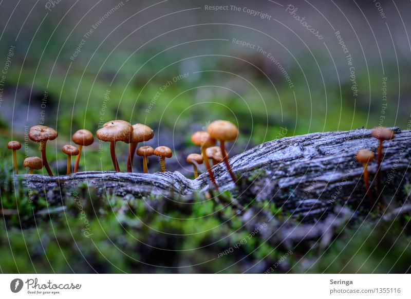 Small but fine mushroom group Environment Nature Landscape Plant Animal Autumn Moss Park Meadow Forest Eating Growth Mushroom Mushroom cap Beatle haircut