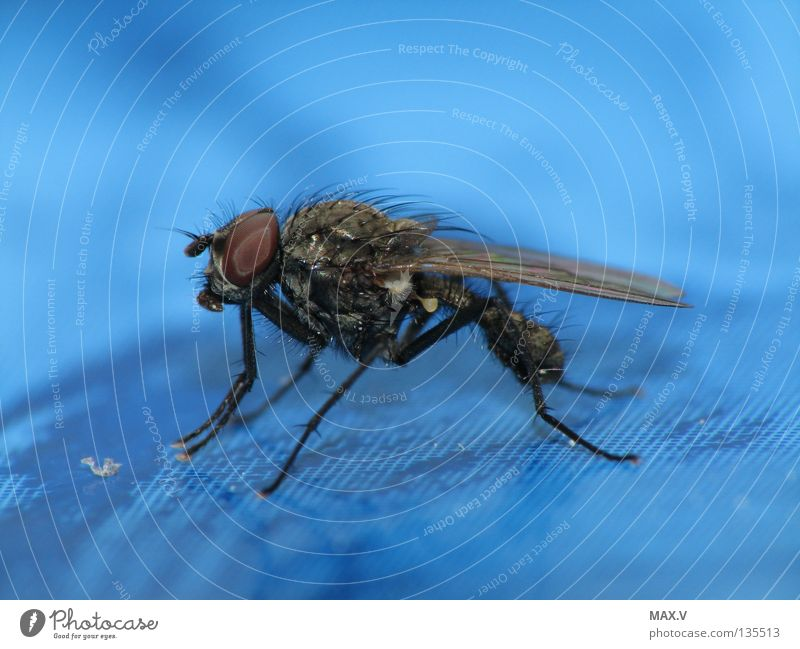 Shower break Animal Insect Black Compound eye Fly Near Blue Bee Wing Legs Hair and hairstyles