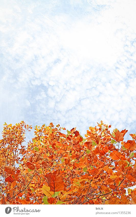 Lamb clouds on autumn... Nature Sky Clouds Autumn Plant Park Forest Change Autumnal Autumn leaves Autumnal colours Seasons Indian Summer Twigs and branches