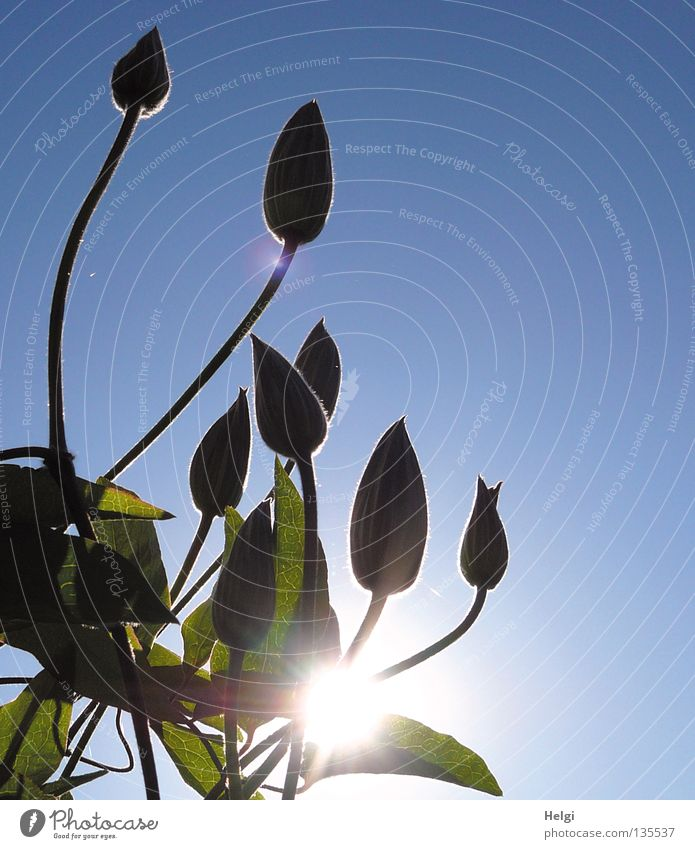 sunny buds... Towering Wall (building) Growth Flourish Flower Blossom Stalk Long Thin Oval Plant Sun Lighting Sunbeam Spring Beautiful weather Tall Green Brown